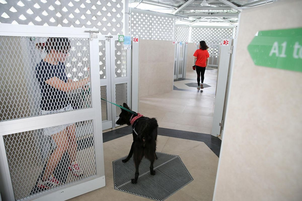 SPCA volunteer Lim Yong Xiu introduces Boy, a black male cross breed, into its new home.