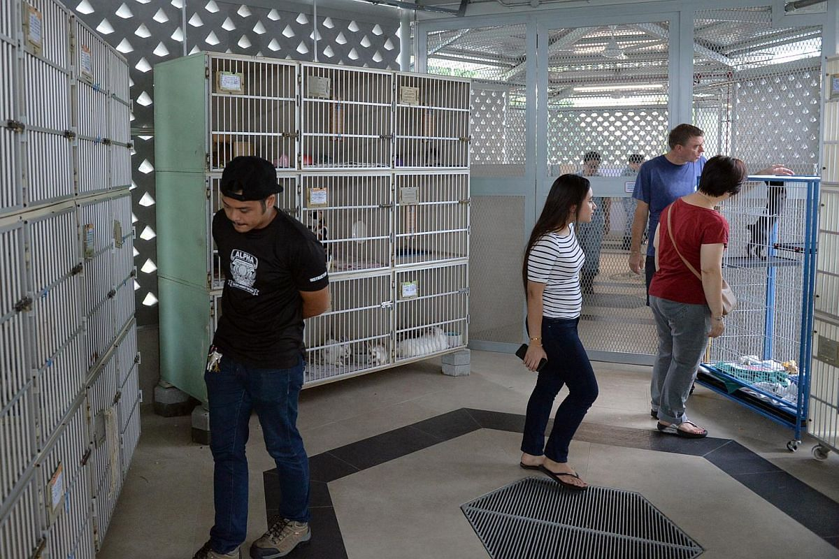 Volunteers interacting with animals in the new SPCA facility in Sungei Tengah Road.