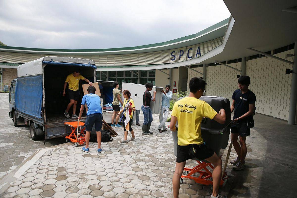 SPCA volunteers moving furniture and a dog (in the crate in the foreground) to new facility on Jan 20, 2016.