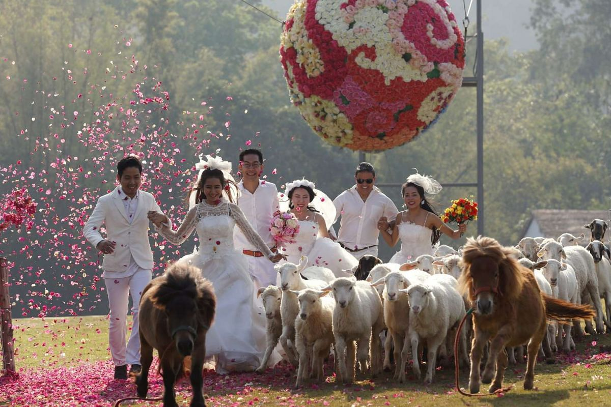 Thai married couples run as they are followed by a flock of sheep during the Thailand Adventure Wedding 2016 event to celebrate Valentine's Day in Ratchaburi, Thailand.