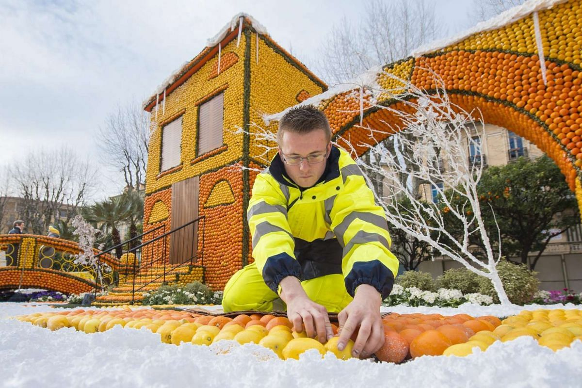 A man works in front of the sculpture 'Les Nuits Blanches' made with lemons and oranges at the Lemon festival in Menton, France on Feb 10, 2016.