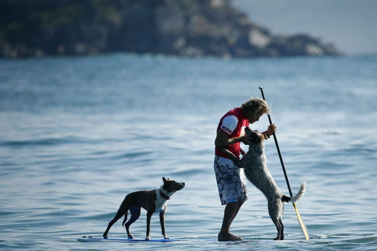 Chris de Aboitiz receives affection from his dog Millie (right) as fellow pet dog Rama watches on as they wait for a wave off Sydney's Palm Beach on Feb 18, 2016.
