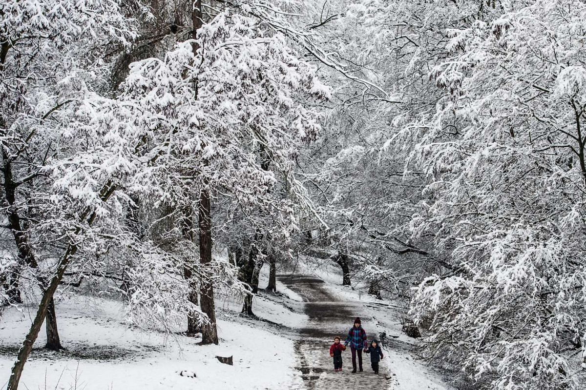 Pedestrians walking in a park with snow-covered trees in Prague, Czech Republic, on March 1, 2016.
