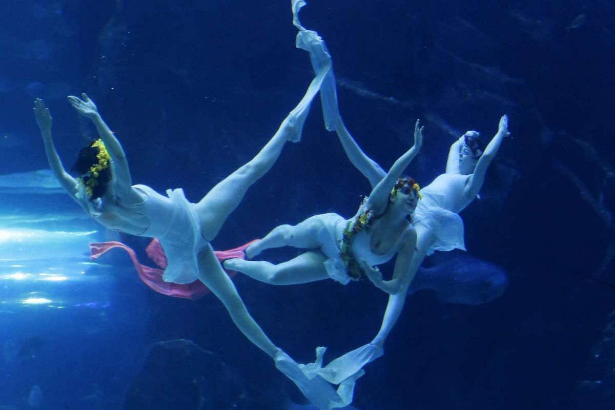 Professional divers giving an underwater ballet performance at an aquarium in the city of Goyang, north of Seoul, South Korea, on March 3, 2016.