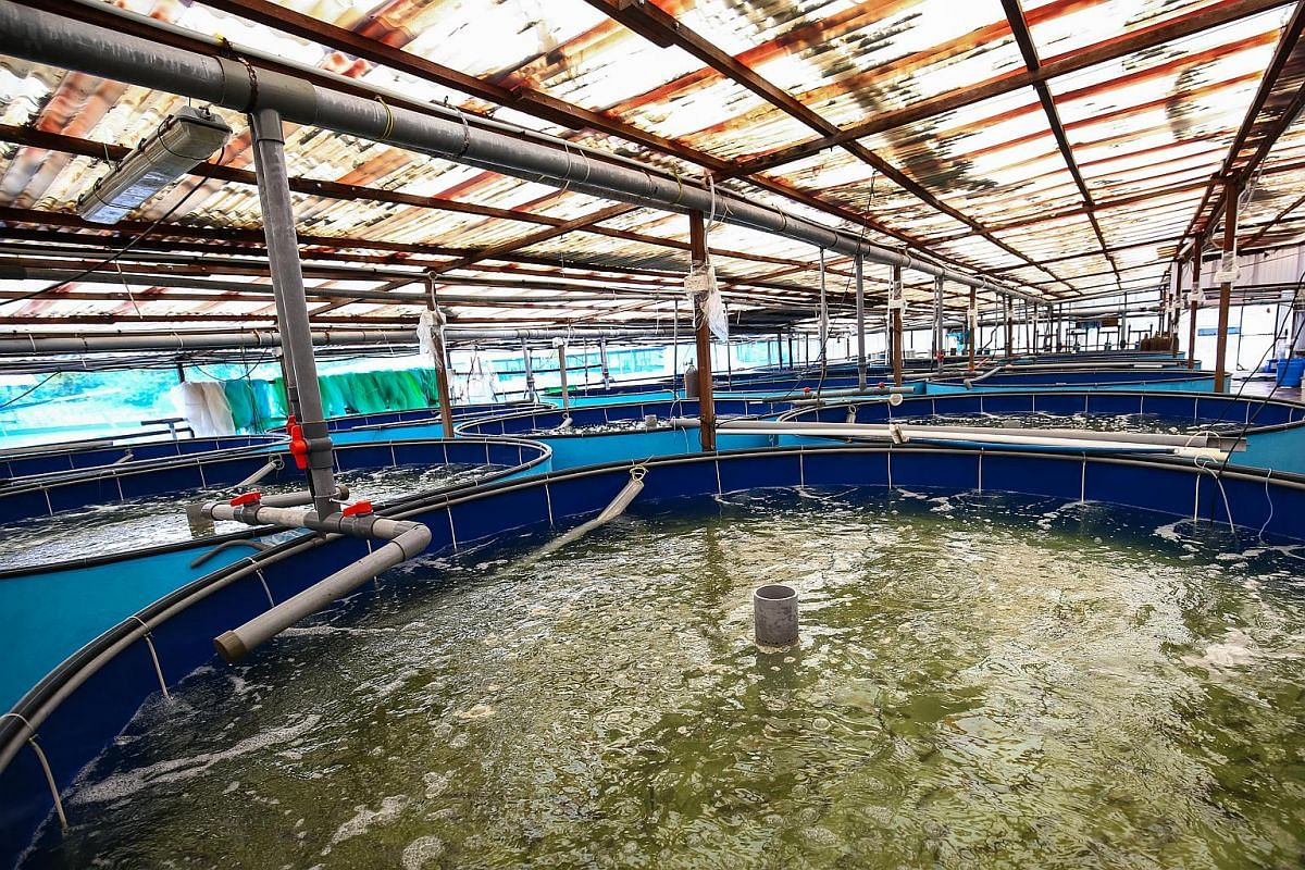 One of the fish farming facilities at Marine Life Aquaculture on March 7, 2016.