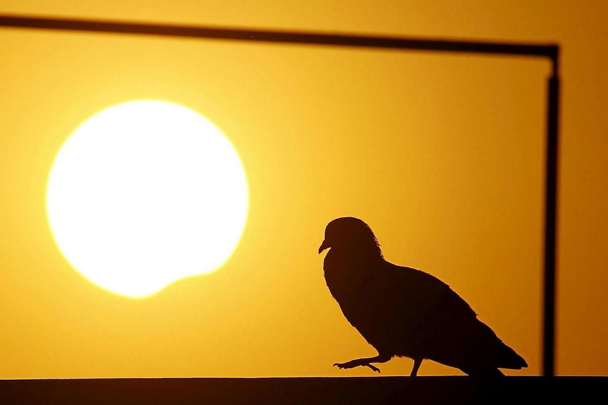 A pigeon is silhouetted as the sun goes into a partial solar eclipse in Kathmandu, Nepal, on March 9, 2016.