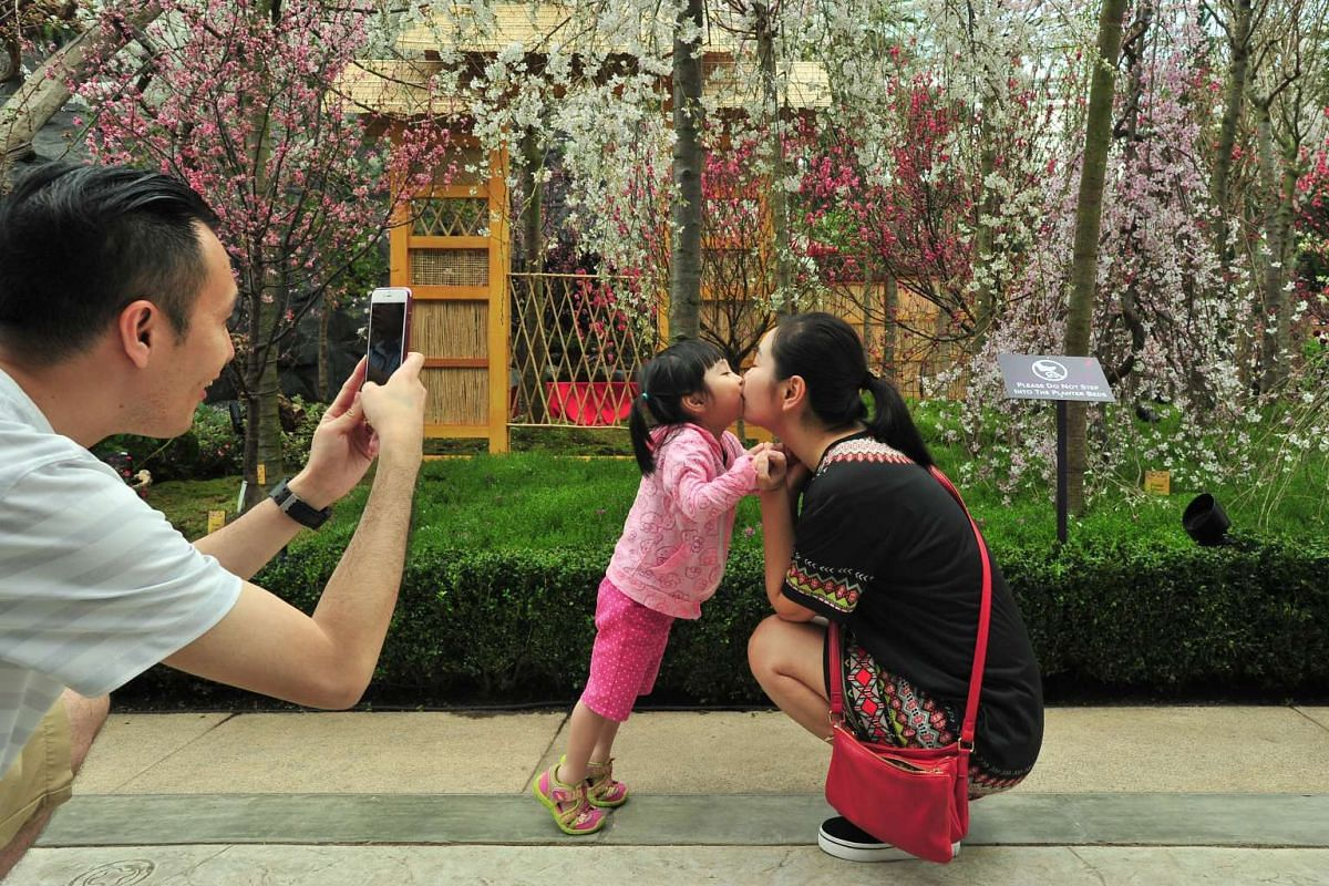 Mr Johnny Lok, 36, taking a photo of his 3-year-old daughter Chloe Lok kissing his wife Ms Janet Un, 26, in front of Gardens by the Bay's cherry blossom display at the Flower Dome on March 15, 2016.