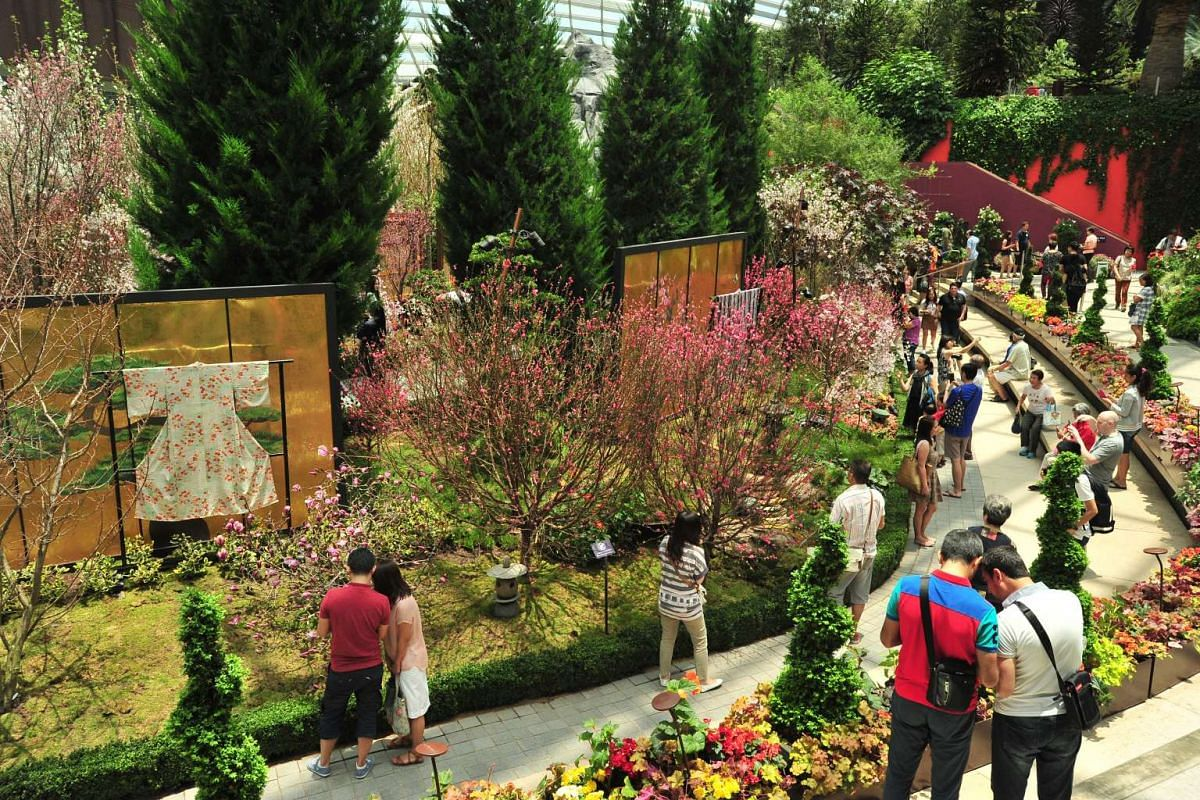 Visitors looking at the cherry blossoms on display at the Gardens by the Bay's Flower Dome on March 15, 2016.
