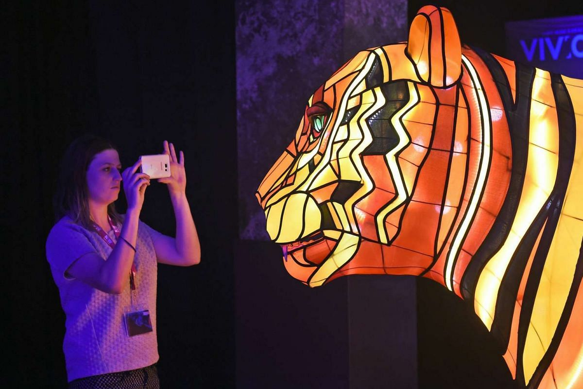 A woman takes a photo of a giant Sumatran tiger light installation at the launch of Vivid Sydney, in Sydney on March 17, 2016. PHOTO: AFP