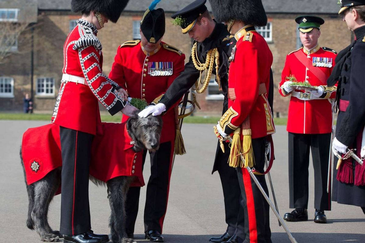 Britain's Prince William, Duke of Cambridge presenting a sprig of shamrock to a four-year-old Irish Wolfhound called Domhnall, who is the mascot of the 1st Battalion Irish Guards, during a St Patrick's Day Parade in Hounslow, west London, on March 17
