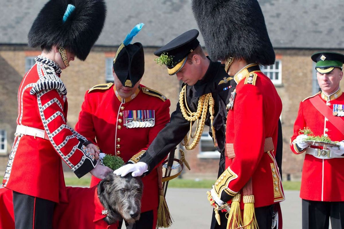 Britain's Prince William, Duke of Cambridge (third from left), presents a sprig of shamrock to an Irish Wolfhound during a St Patrick's Day parade in London, on March 17, 2016.