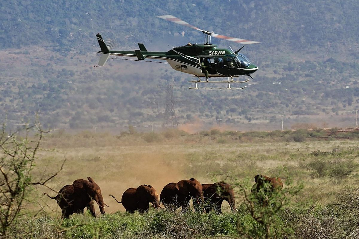A veterinarian with the Kenya Wildlife Service hovering in a helicopter over a family of elephants before darting one of them during a collaring operation in Tsavo East National Park. Technological advances such as collars, sensors and remote cameras