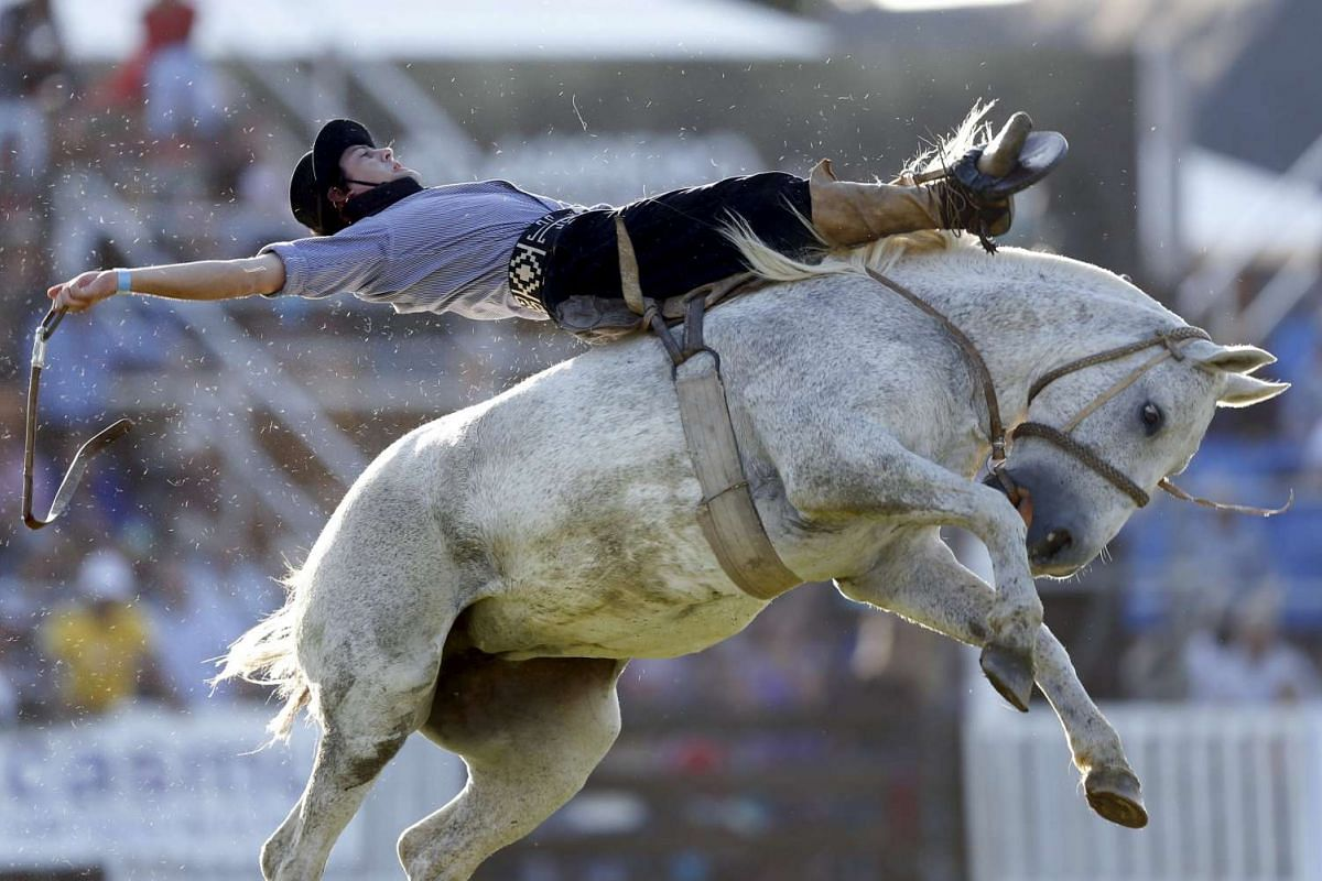 A gaucho rides an untamed horse during Creole week celebrations in Montevideo, on March 23, 2016.