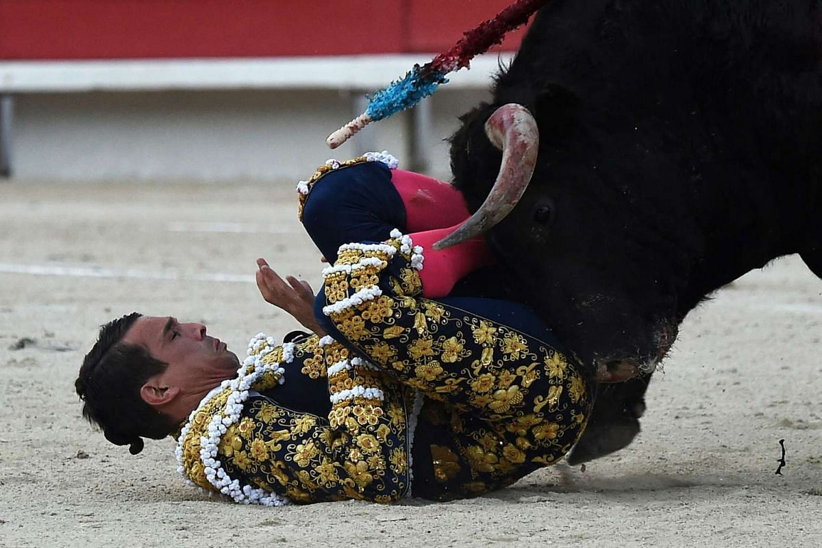 Spanish bullfighter Jose Maria Manzanares is overturned by Spanish Garcigrande bull in Arles, France, on March 26, 2016.