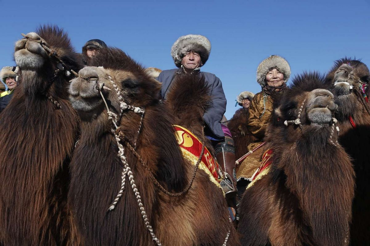 People wearing traditional costumes wait for a parade on the back of camels during Temeenii bayar, the Camel Festival, in Dalanzadgad, Mongolia, on March 6,  2016.