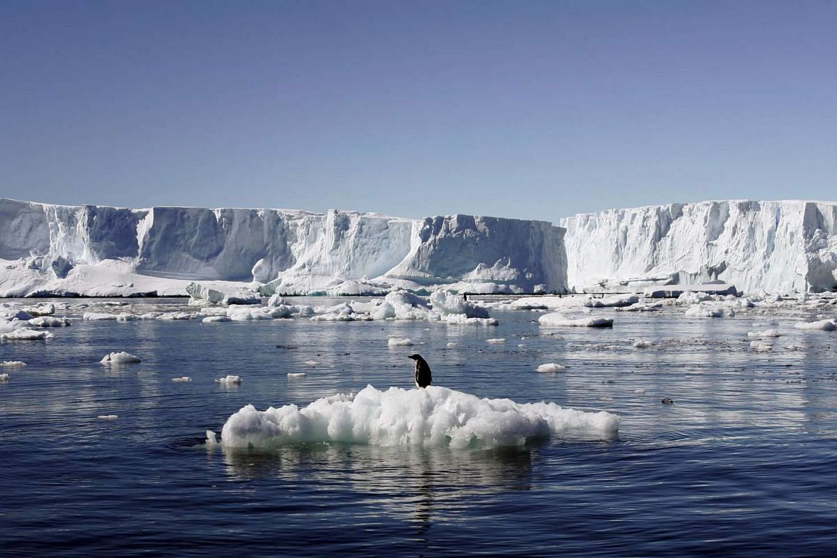 File photo of an Adelie penguin standing atop a block of melting ice at Dumont díUrville in East Antarctica, on Jan 23, 2010.