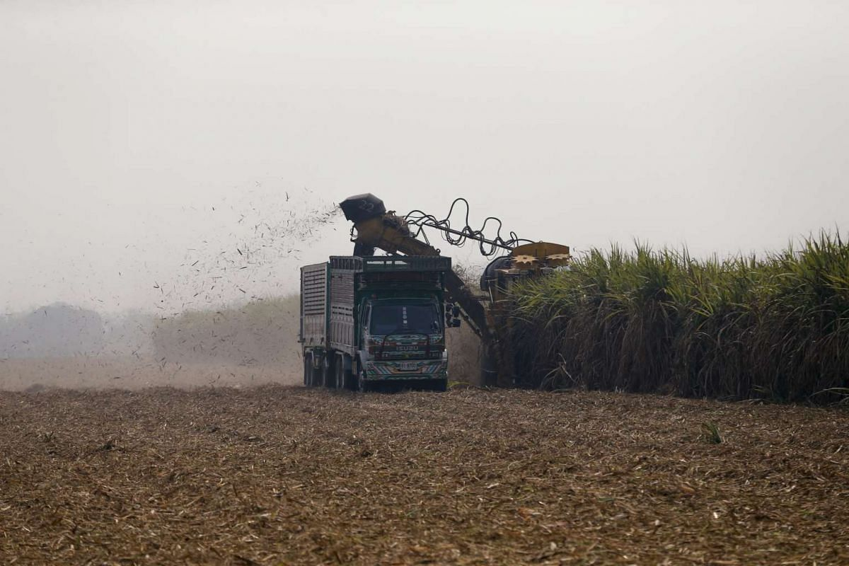 A truck and a tractor harvest sugar cane in a field at Pakchong district, Thailand, on March 22, 2016.