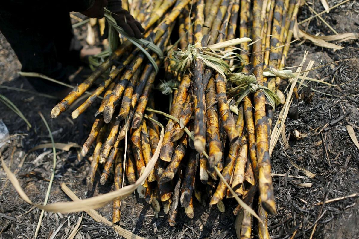Sugar cane is seen after being harvested in a field at Pakchong district, Thailand, on March 22, 2016.