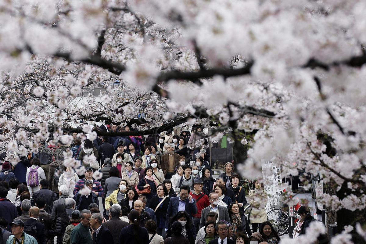People walking under cherry trees in bloom in Tokyo on April 1.