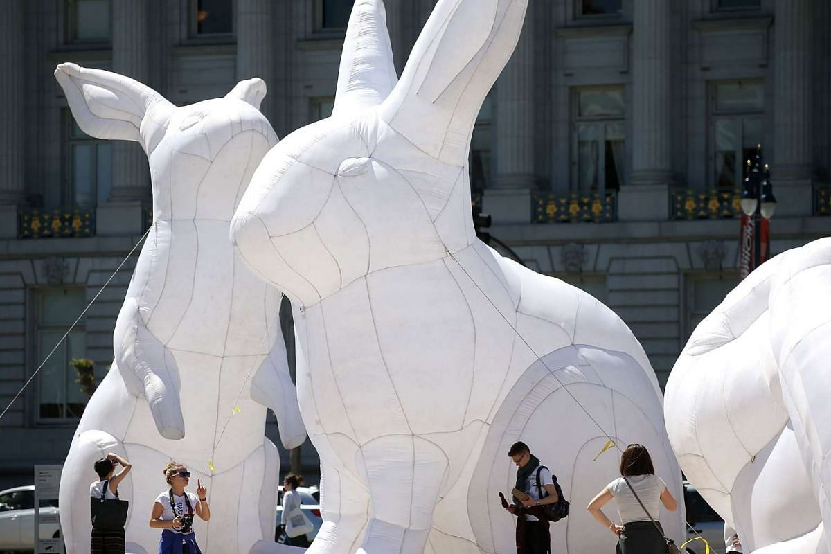 Inflatable white rabbits that are part of the art installation 'Intrude' are displayed at Civic Center Plaza in front of San Francisco City Hall on April 5, 2016 in San Francisco, California. PHOTO: GETTY IMAGES/AFP