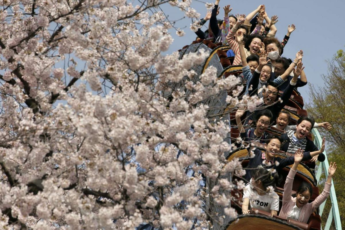 People ride a roller coaster next to cherry blossoms in full bloom at Toshimaen amusement park in Tokyo, Japan,  April 6, 2016. PHOTO: EPA