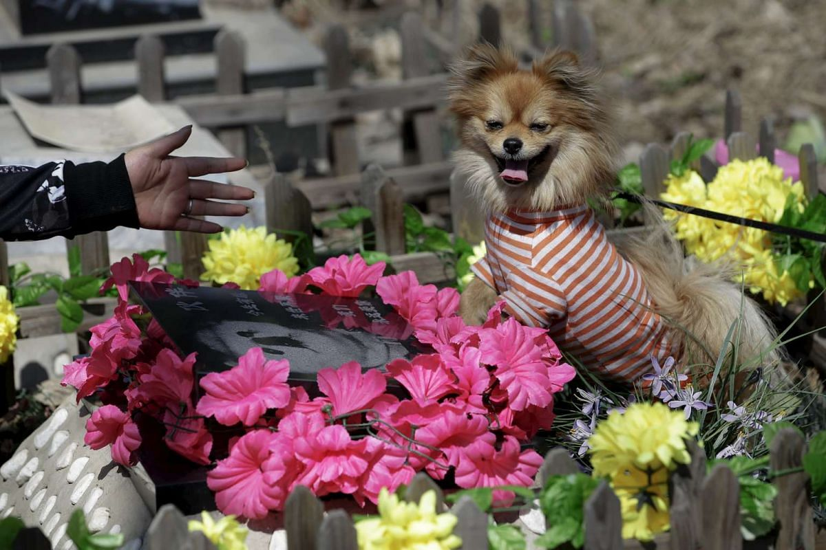 """Pet owner Qingqiu gesturing to her dog, Little Huoban, after she swept the tomb of her previous dog Huoban (which means """"Buddy"""" in Chinese) who died at the age of 15, ahead of the Qingming Festival at Baifu pet cemetery on the outskirts of Beijing, C"""