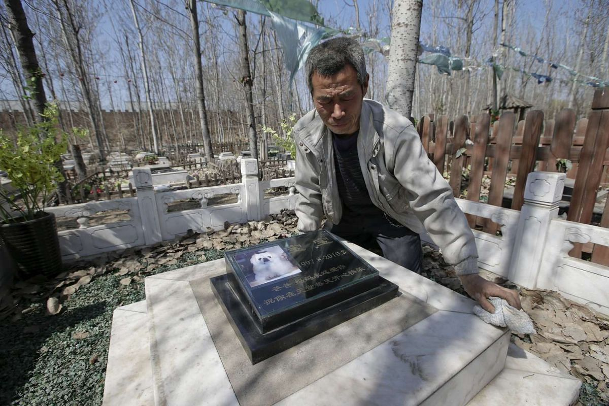 Baifu pet cemetery worker Zhang Youwang cleaning the tomb of pet dog Baobao, which died at the age of 13, during his daily work ahead of the Qingming Festival on the outskirts of Beijing China, on March 26, 2016.
