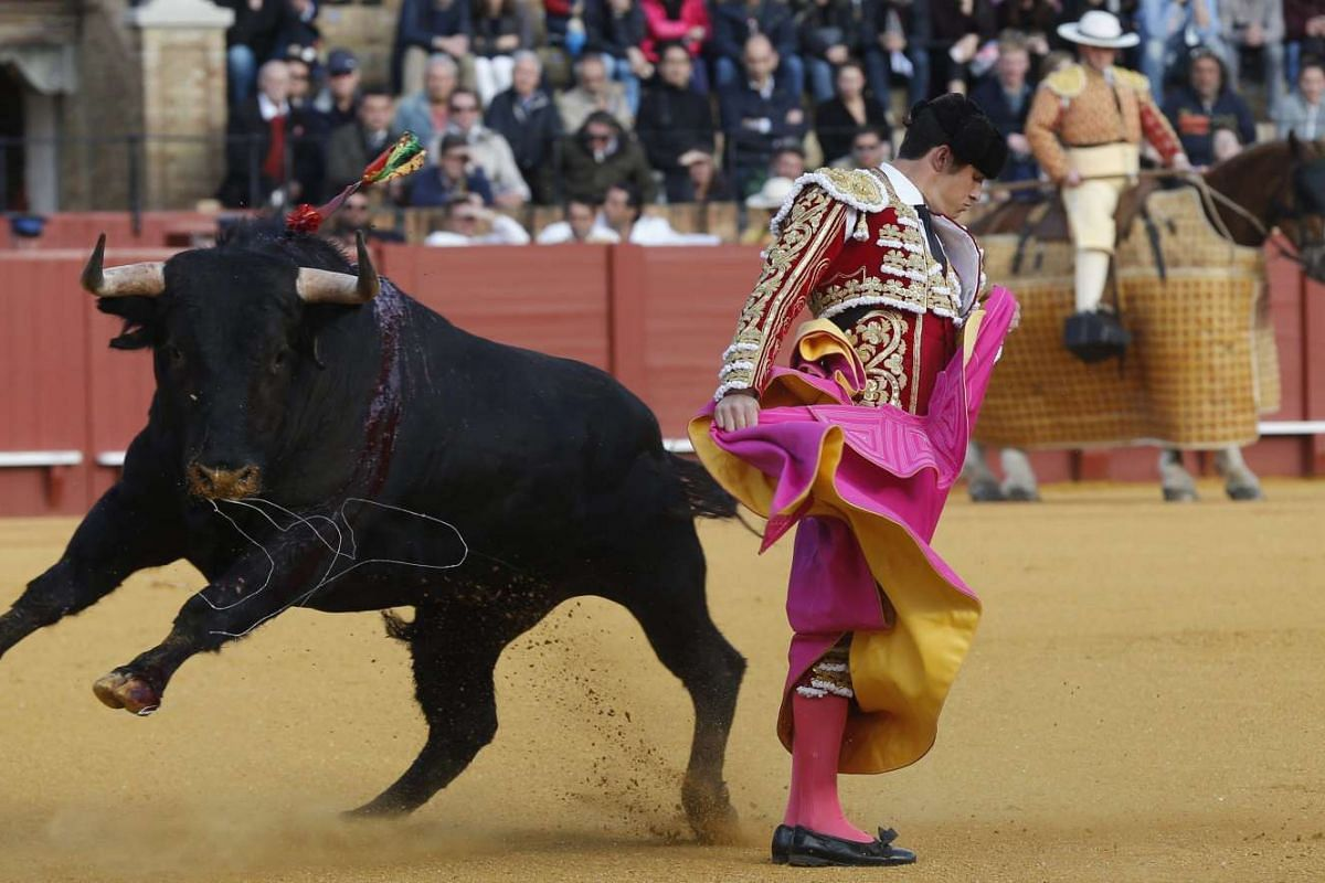 Spanish bullfighter Daniel Luque fights with a bull during the tenth bullfight of the Seville April Fair 2016 held at the Real Maestranza bullring in Sevilla, southern Spain, April 11, 2016. PHOTO: EPA