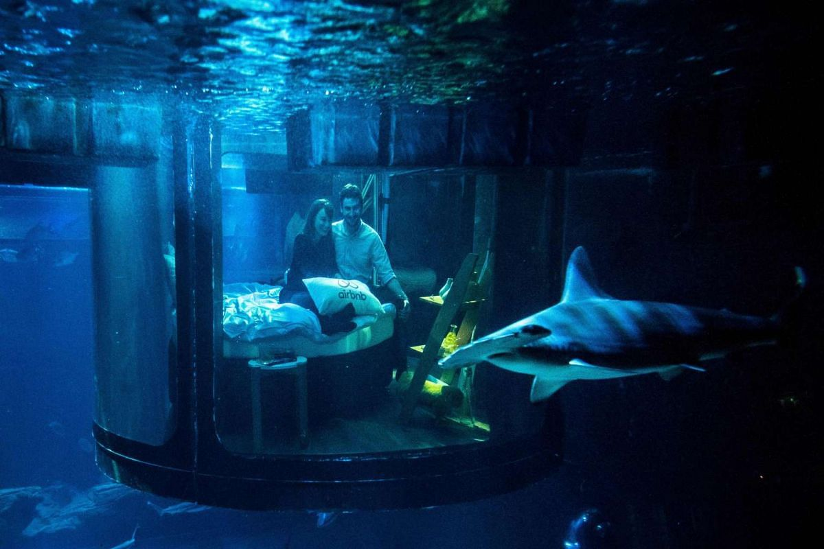 Alister Shipman from Britain and Hannah Simpson from Northern Ireland, winners of a competition on the Airbnb accommodation site, look at a shark tank from an underwater bedroom at the Aquarium de Paris on April 11, 2016 in Paris. PHOTO: AFP