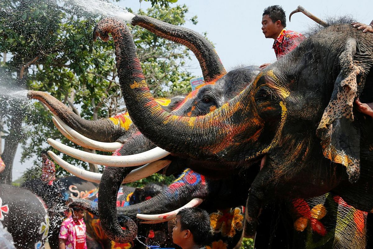 Elephants spraying people with water in Thailand's Ayutthaya province on April 11.