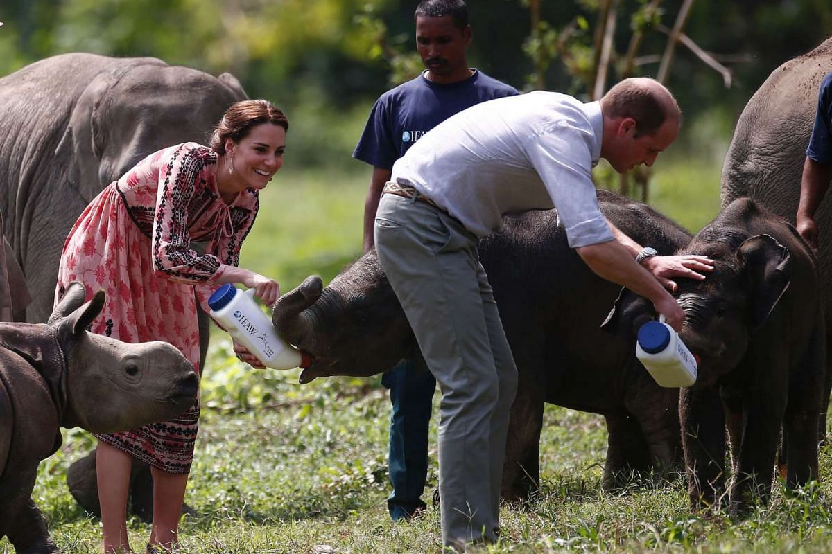 William and Kate feed baby elephants at the Centre for Wildlife Rehabilitation and Conservation at Panbari reserve forest in Kaziranga, India, on April 13, 2016.