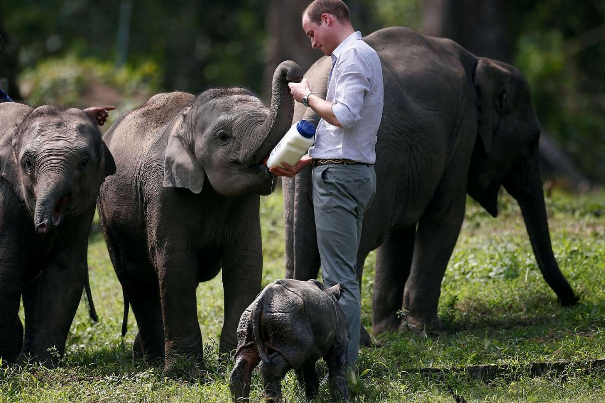 Prince William feeds a baby elephant at the Centre for Wildlife Rehabilitation and Conservation at Panbari reserve forest in Kaziranga, India, on April 13, 2016.