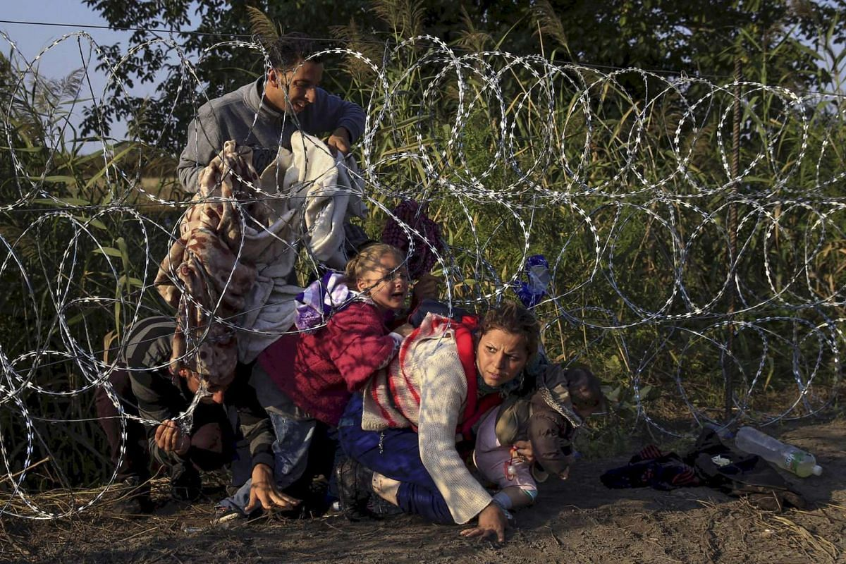 Syrian migrants crossing under a fence as they enter Hungary at the border with Serbia, near Roszke, on Aug 27, 2015.
