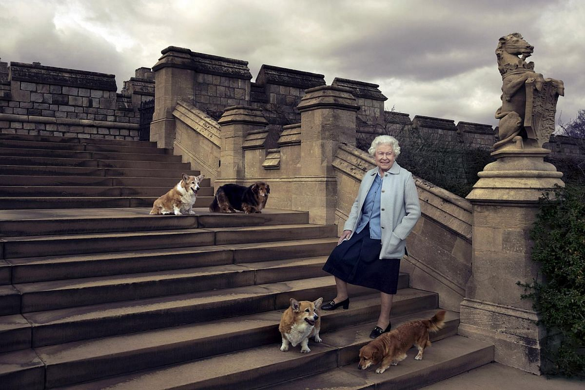Britain's Queen Elizabeth II is seen walking in the private grounds of Windsor Castle with four of her dogs: clockwise from top left Willow (corgi), Vulcan (dorgie), Candy (dorgie) and Holly (corgi).