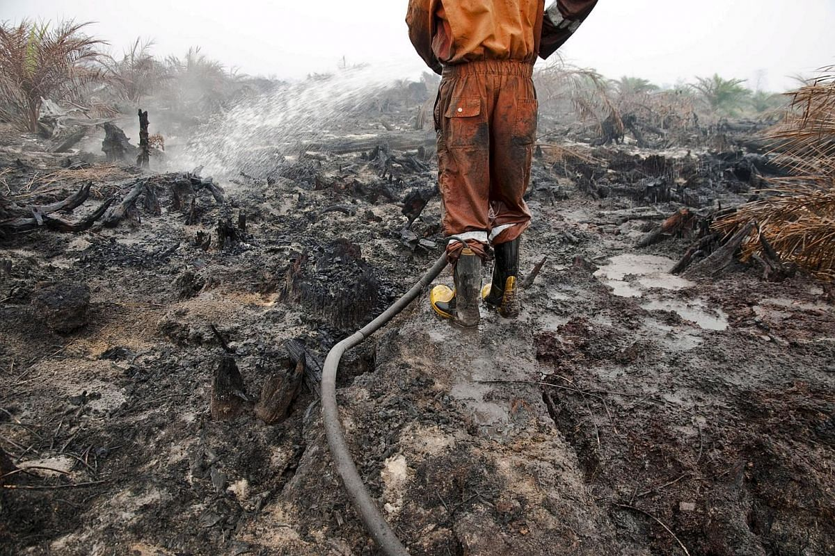 A firefighter from the local disaster management agency extinguishing a peatland fire in a palm oil plantation in Pelalawan, Indonesia, on Sept 26, 2015.