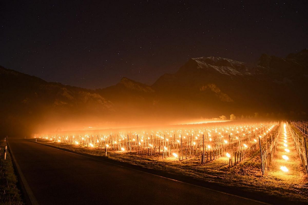 Anti-frost candles burn in a vineyard in Flaesch, in the Swiss canton of Grisons, on April 28, 2016.