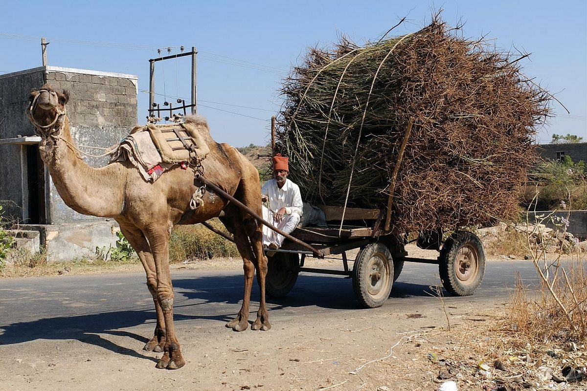 People still travel by camel carts.