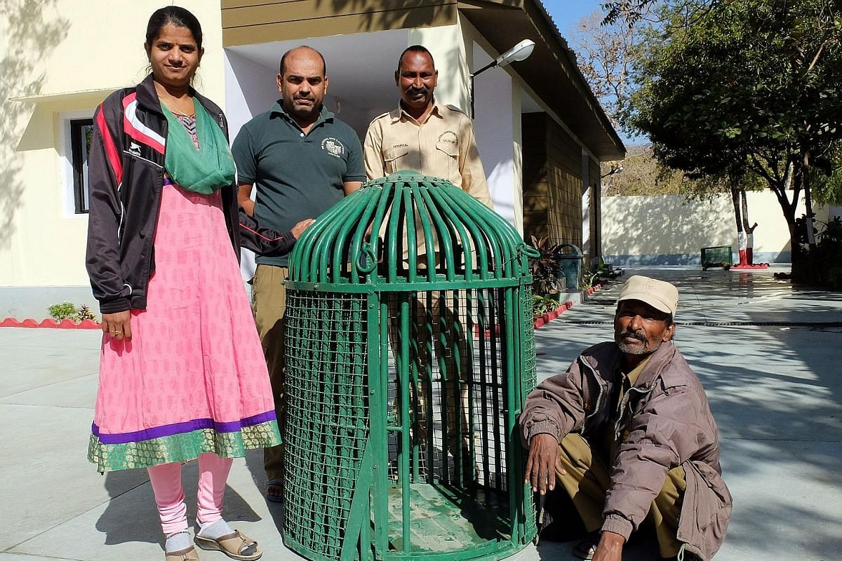 Asiatic lions in the Gir forest, and Ms Rasila Vadher (left), head of the Gujarat Forest Department's rescue team and her team members with a cage they use to enter wells to help free trapped animals.
