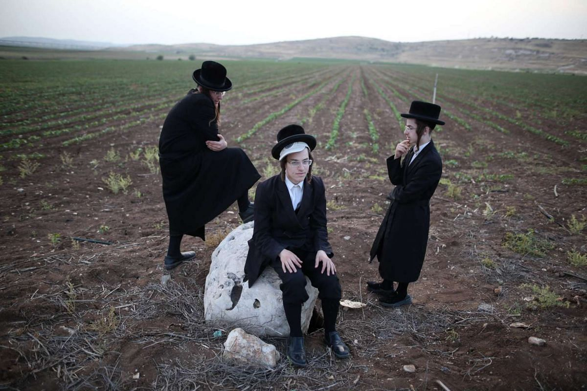 Ultra-Orthodox jews look on after harvesting wheat using hand sickles in a field near the Mevo Horon settlement in the Israeli occupied West Bank on May 2, 2016. PHOTO: AFP