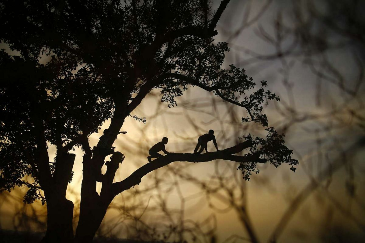 Palestinian children climb up on a tree as the sun sets on May 2, 2016, in the Jabalia refugee camp in the northern Gaza Strip. PHOTO: AFP