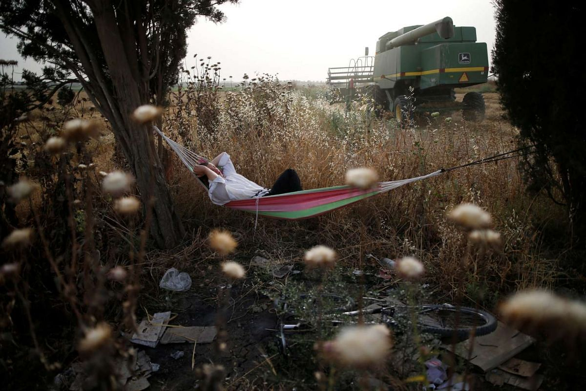 An Ultra-Orthodox Jewish man rests as a harvester passes by in the Ultra-Orthodox moshav of Komemiyut May 3, 2016. PHOTO: REUTERS