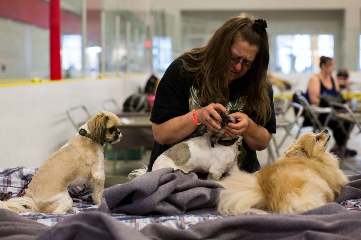 Rhonda Kossey looks after her three dogs, Elmo, Gizmo, and, Lacey while staying at the Anzac Community Centre.