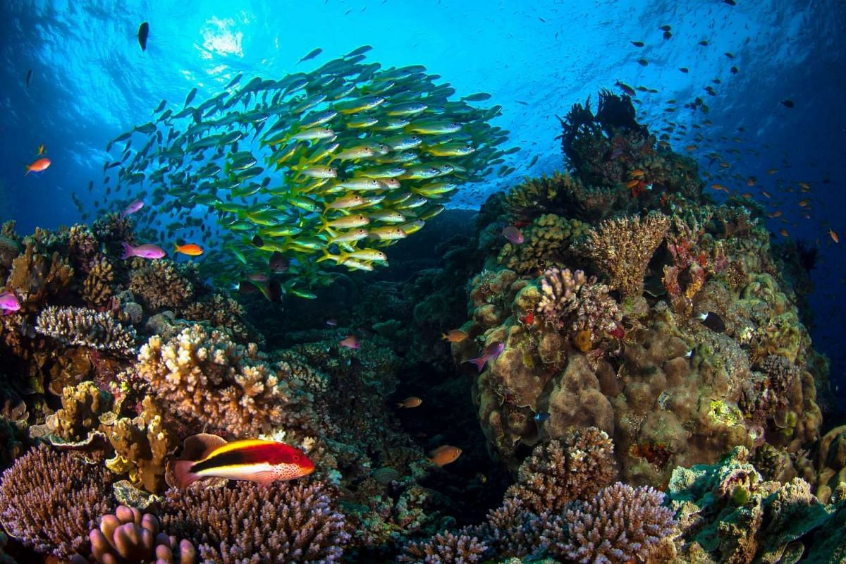 This undated handout picture received on May 19, 2016 from James Cook University shows life on the Great Barrier Reef in Queensland. Australia's Great Barrier Reef could be beyond saving in five years without funding to improve water quality as clima