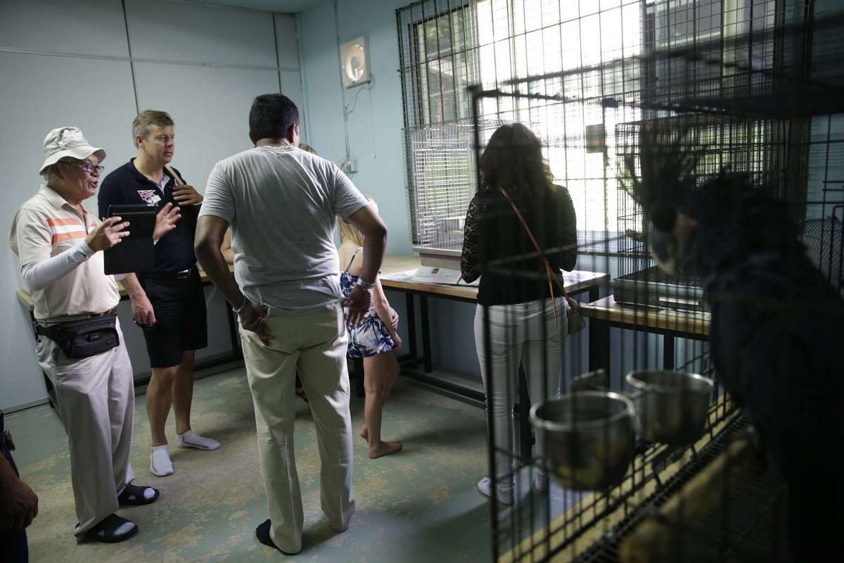 Mandai Birds Sanctuary co-founder Daniel Teo (left) guiding his overseas guests on a tour of the sanctuary on April 30, 2016.