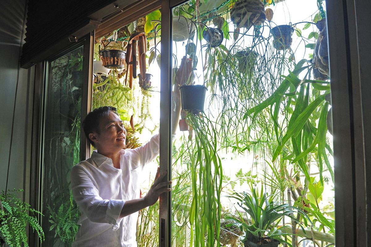 IT consultant James Ip has about 200 plants in the balcony of his apartment.
