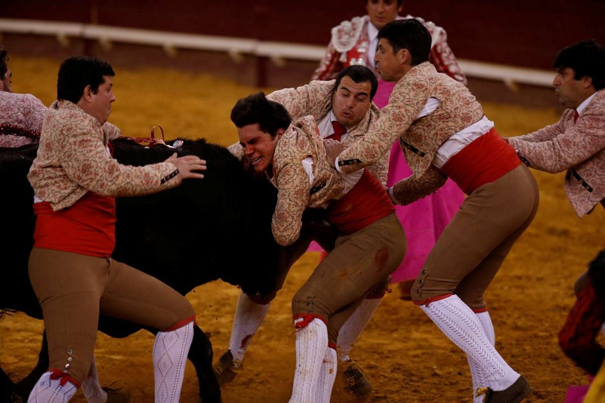 Members of the Coruche forcados group perform during a bullfight at Campo Pequeno bullring in Lisbon, Portugal June 2, 2016. PHOTO: REUTERS