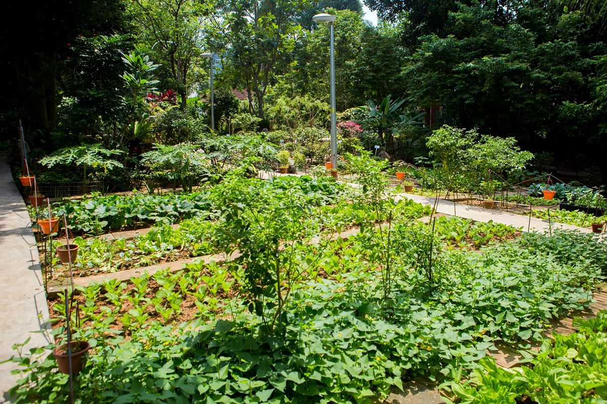 The Community In Bloom project (above) by Moulmein Goldhill Neighbourhood Committee; and Urban Farming initiative.