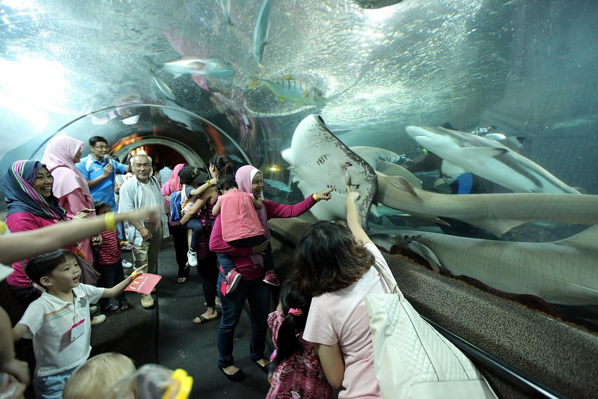 Visitors checking out the marine creatures under water without getting wet.
