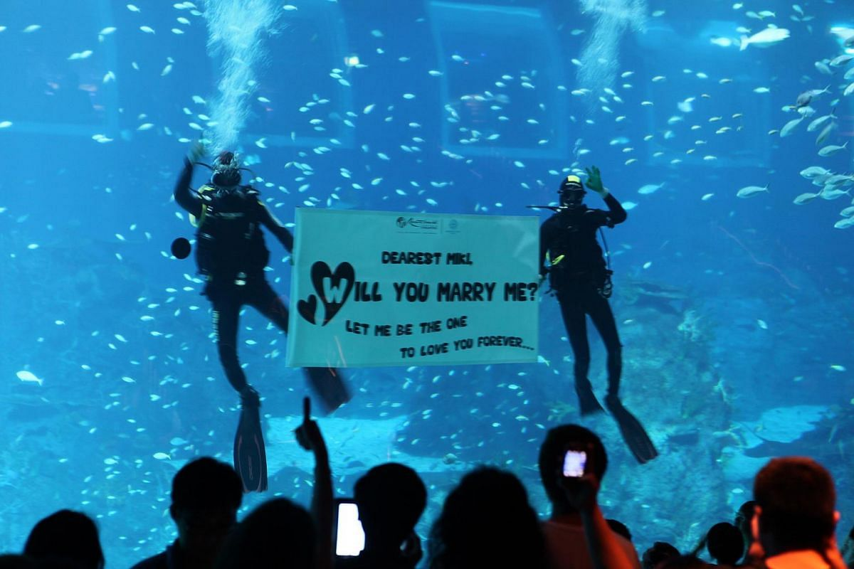 A marriage proposal at Underwater World Singapore.