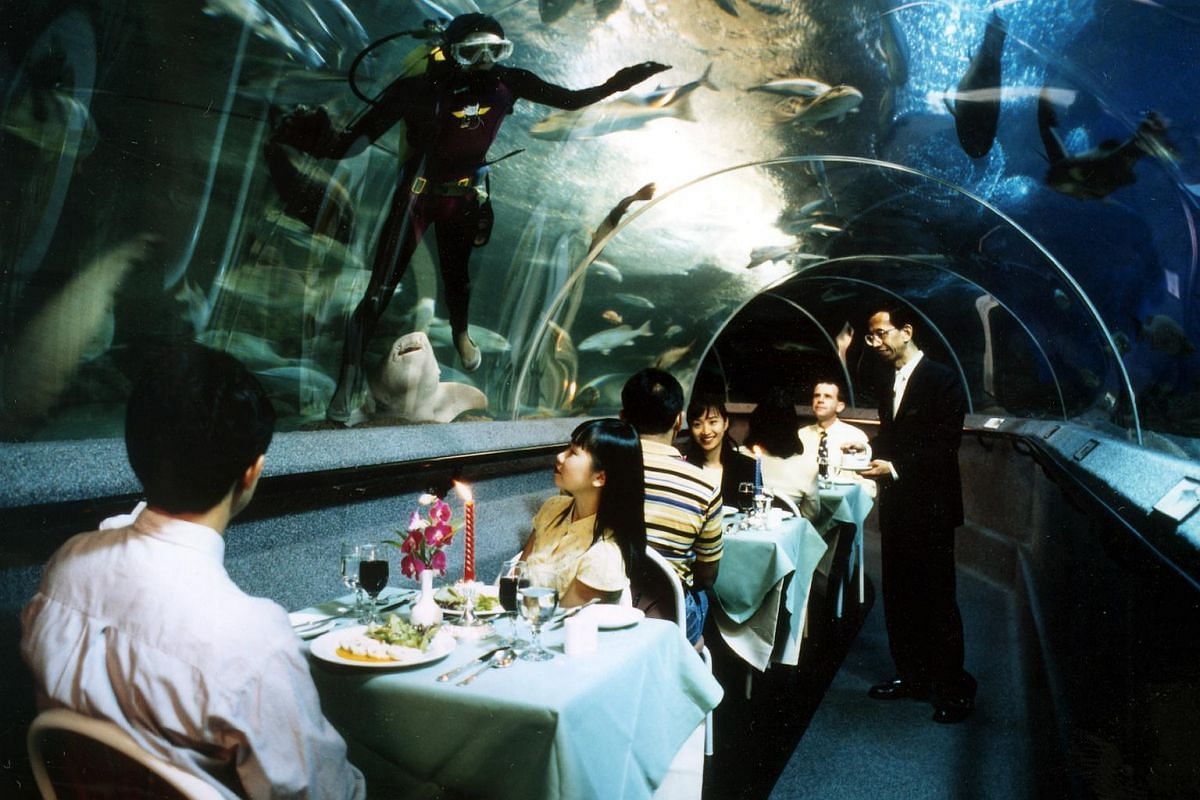 Dinner time for marine creatures as well as guests at Underwater World Singapore.